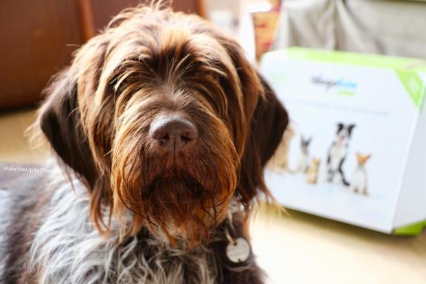 vidéo-unboxing-box-gratuite-pour-chiens-dogobox-pour-tous--bloopers-fuji-dog-noel-vidéo-drole-cadeaux-pour-chiens-idées-blogueuse-youtubeuse-croquettes-friskies-corona-direct