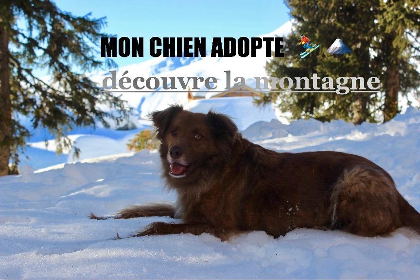 Voyager avec son chien à la montagne
