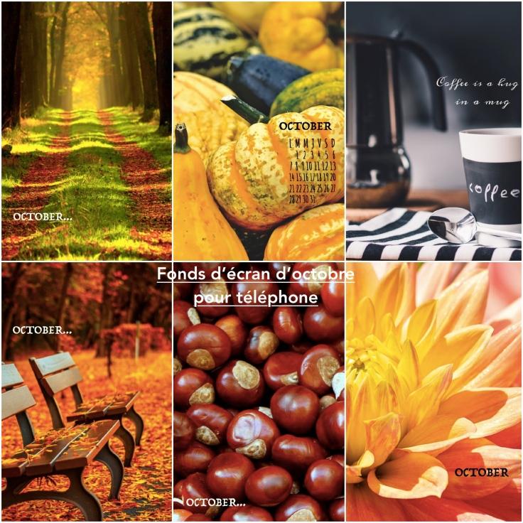 fond-d-ecran-téléphone-octobre-2019-automne-autumn-fall-october-citrouilles